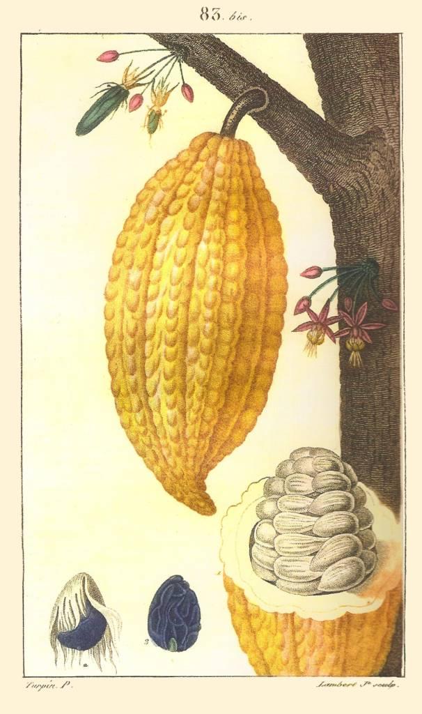Reseña de Historia del Chocolate